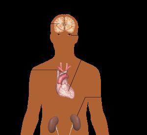 anatomy-of-the-human-body-1279987_1280